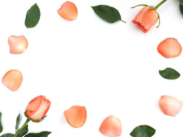 Schließen sie herauf rosen mit den blumenblättern und grünblättern auf weißem rahmenhintergrund