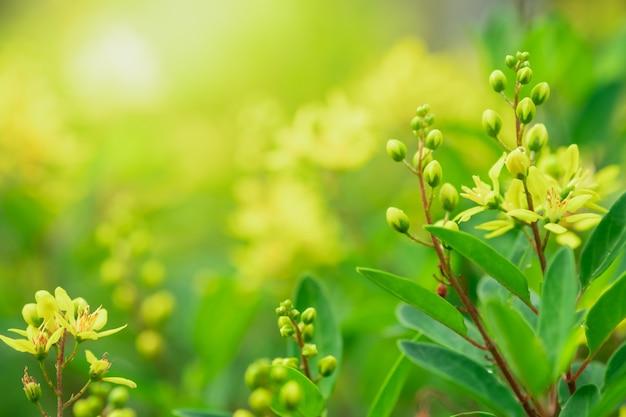 Schließen sie herauf schöne ansicht von naturgrünblättern auf unscharfem grünbaumhintergrund