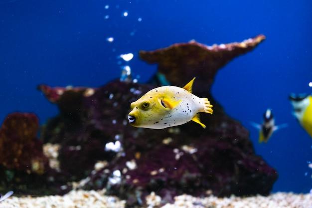 Schließen sie herauf schöne fische im aquarium auf dekoration des wasserpflanzenhintergrundes.