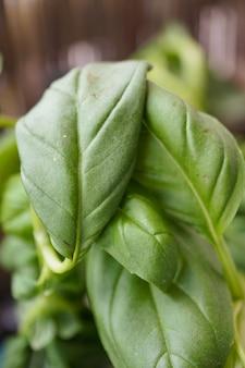 Schließen sie herauf schuss von grünen blättern einer pflanze