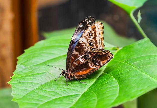 Schließen sie herauf seitenansicht des schmetterlings auf grünem blatt im frühling oder sommer