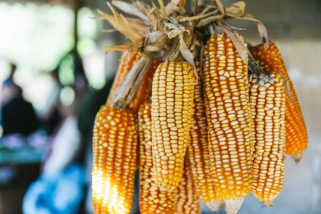 Schließen sie herauf sonnengetrockneten mais mit hartem sonnenlicht, das von der decke hängt.