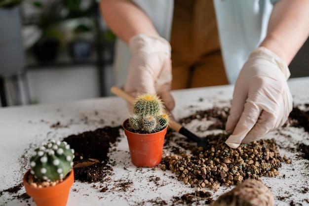 Schließen sie herauf wachsende frau, die pflanzen wächst