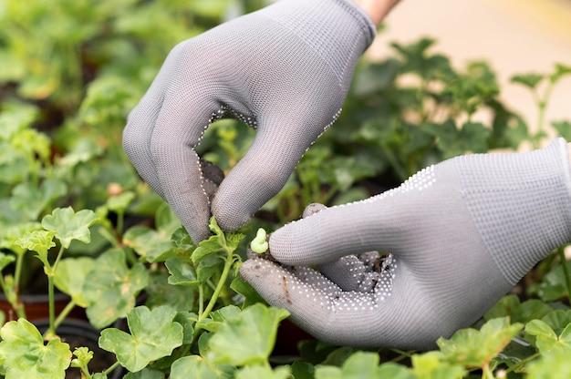 Schließen sie herauf wachsende pflanzen des menschen