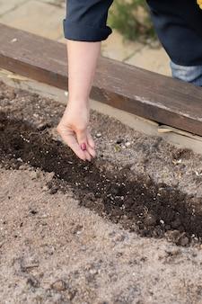 Schließen sie herauf weiblicher gärtnerhandsamen-landwirtschaftspflanze in boden, pflanzensamen