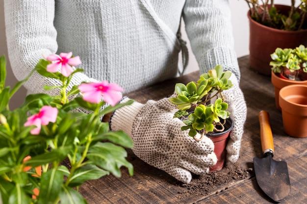 Schließen sie, indem sie blumen in topf pflanzen