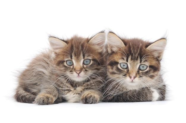 Schließen sie kleine kätzchen im studio