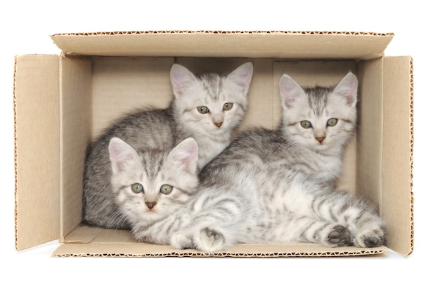 Schließen sie kleine kätzchen in einem karton