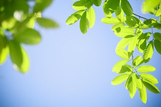 Schließen sie nahes des grünen blattes der naturansicht auf klarem blauem himmelhintergrund unter sonnenlicht mit kopienraum, der als hintergrund natürliche pflanzenlandschaft, ökologie-abdeckungskonzept verwendet.