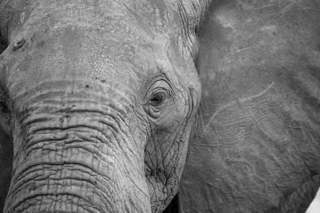 Schließen sie oben auf gesicht eines großen roten elefanten