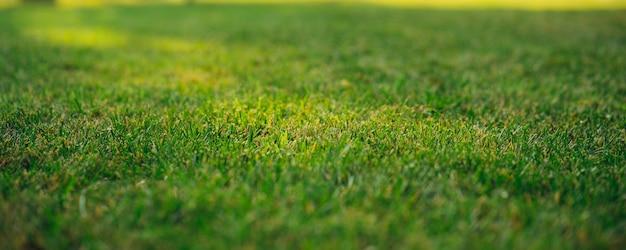 Schließen sie oben auf grünen grasrasen details