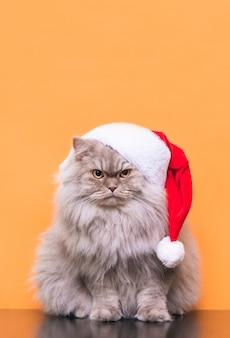 Schließen sie oben auf katze im weihnachtshut lokalisiert