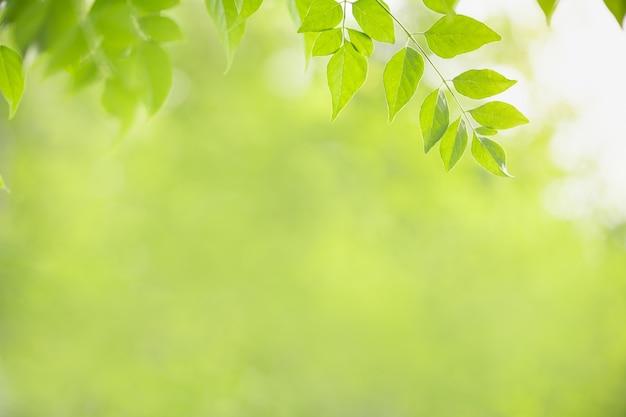 Schließen sie oben auf naturansicht des grünen blattes auf unscharfem grünhintergrund