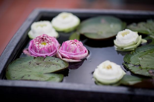 Schließen sie oben auf schönen lotusblumen im teich