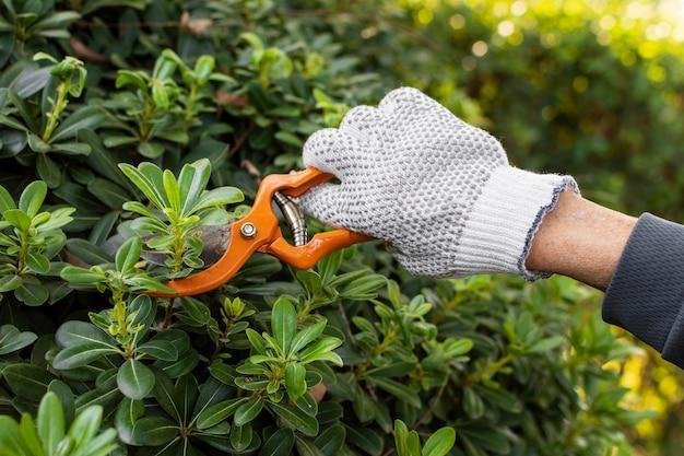 Schließen sie oben das schneiden von pflanzenblättern