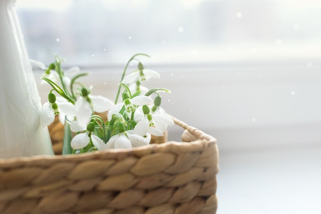 Schließen sie oben frische schneeglöckchen in einem weidenkorb auf einem tisch im sonnenlicht. speicherplatz kopieren