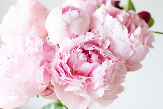 Schließen sie oben glatte rosa blütenblätter pfingstrosenblumen.