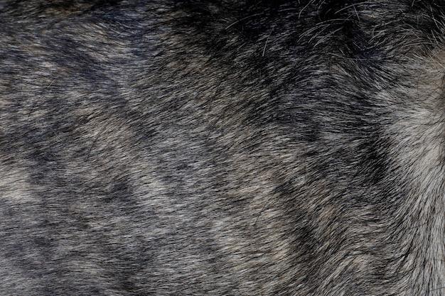 Schließen sie oben graue hundehaut ist schöne natur hundehaut haustier tier für tier und hintergrund