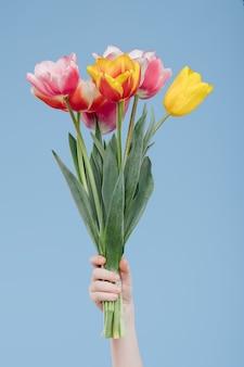 Schließen sie oben, kinderhände mit frühlingsblumen, tulpen, lokalisiert auf blauer wand