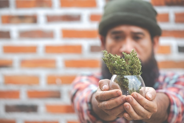 Schließen sie oben marihuana-pflanze in glas auf händen