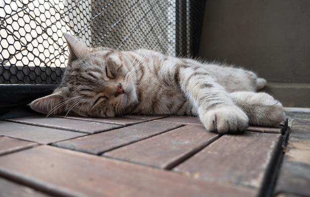 Schließen sie oben niedlichen tabby-katzenschlaf auf holzboden