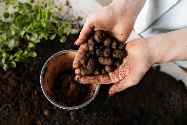 Schließen sie oben pflanzen pflanzenzwiebel in erde