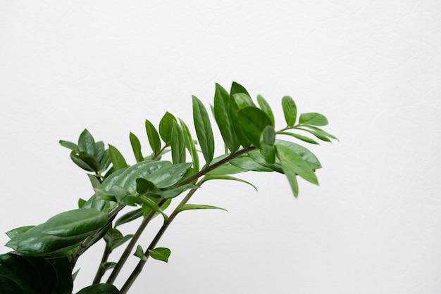 Schließen sie oben pflanzenblätter