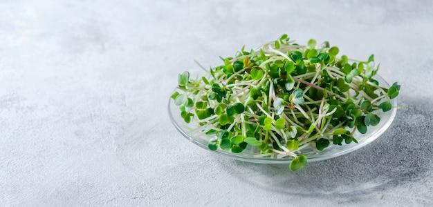 Schließen sie oben radieschen-mikro-grüns in der kleinen platte