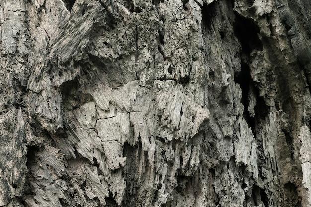 Schließen sie oben vom baumstammhintergrund, beschaffenheit des dunklen barkenholzes mit altem natürlichem muster