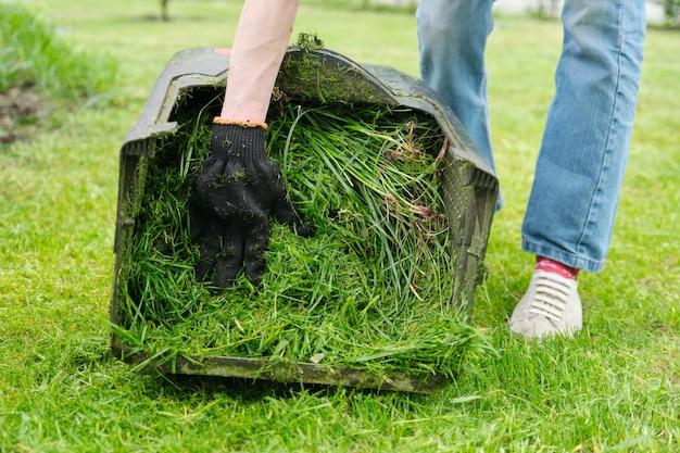 Schließen sie oben vom frisch gemähten gras in einem rasenmäher.