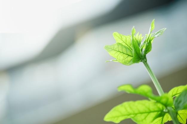 Schließen sie oben vom grünen blatt der jungen naturansicht auf unscharfem gebäudehintergrund unter sonnenlicht mit bokeh und kopieren sie raumhintergrundnaturpflanzenlandschaft,