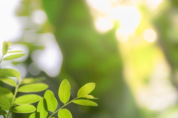Schließen sie oben vom grünen blatt unter sonnenlicht mit unscharfem grünhintergrund