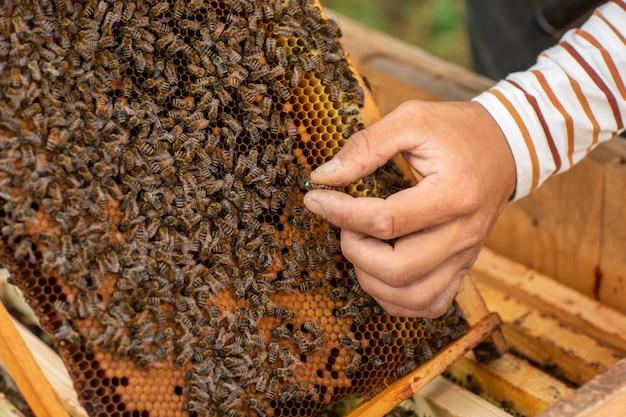Schließen sie oben vom imker, der eine bienenwabe voll von den bienen hält