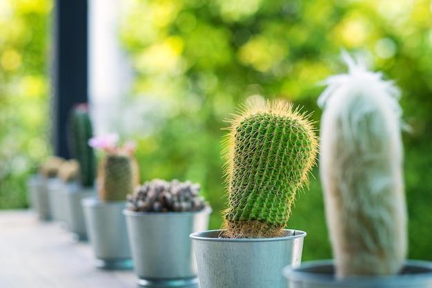 Schließen sie oben vom kugel geformten kaktus mit den langen dornen