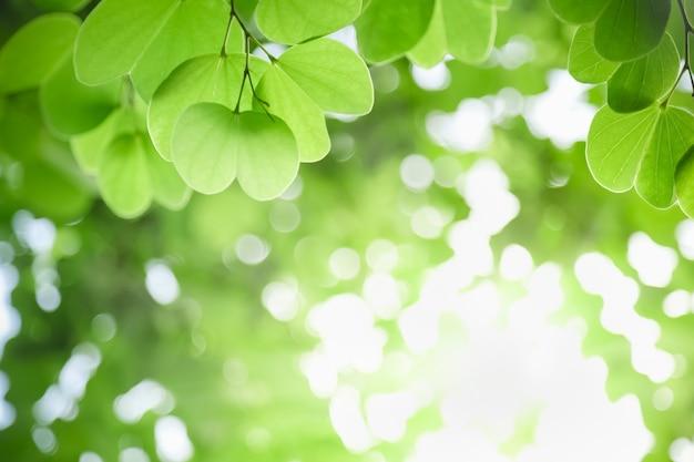 Schließen sie oben vom naturansicht-grünblatt auf unscharfem grün