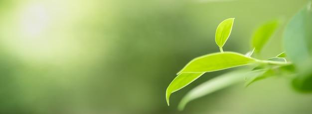 Schließen sie oben vom naturansicht-grünblatt auf unscharfem grünhintergrund unter sonnenlicht mit bokeh und kopieren sie raumhintergrundnaturpflanzenlandschaft, ökologieabdeckungskonzept.