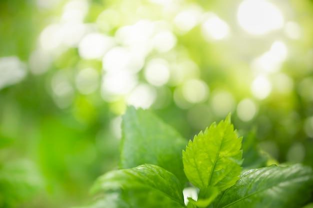 Schließen sie oben vom naturansicht-grünblatt auf unscharfem grünhintergrund unter sonnenlicht