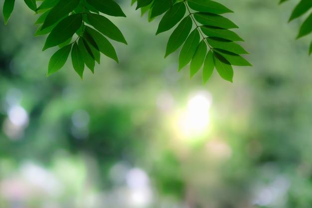 Schließen sie oben vom naturansicht-grünblatt auf unscharfem grünhintergrund