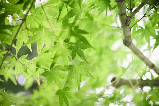 Schließen sie oben vom naturansichtgrün-ahornblatt
