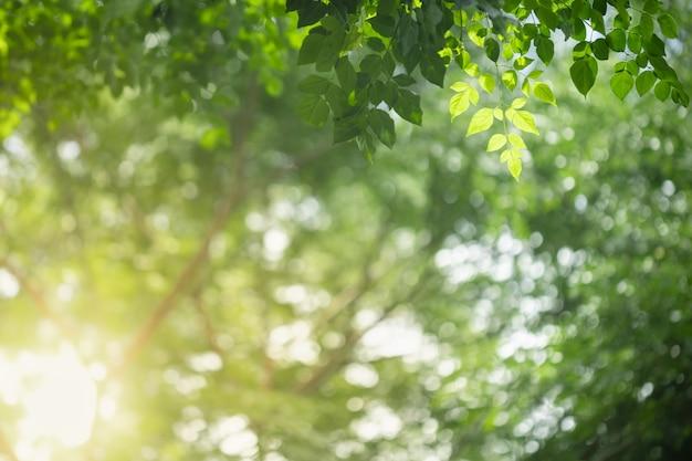 Schließen sie oben vom naturansichtgrün millingtonia hortensis blatt auf unscharfem grünhintergrund