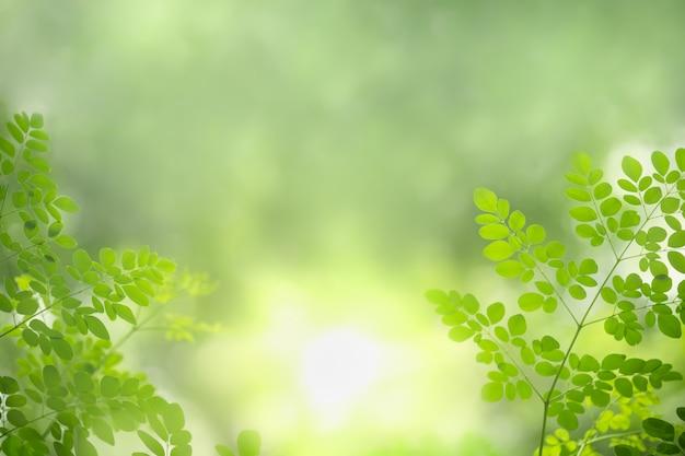 Schließen sie oben vom naturgrünblatt auf unscharfem grün unter sonnenlicht.