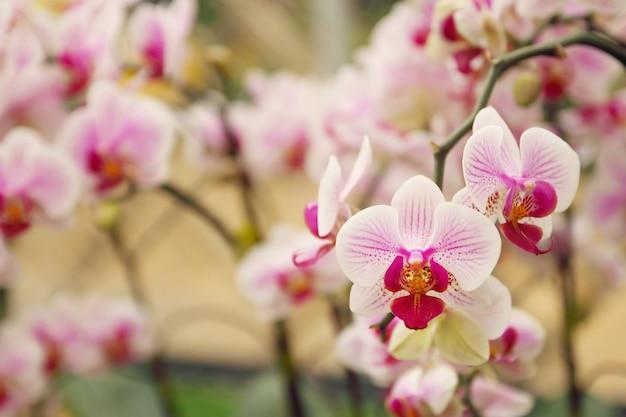 Schließen sie oben vom orchideenblumenstrauß mit natürlichem hintergrund
