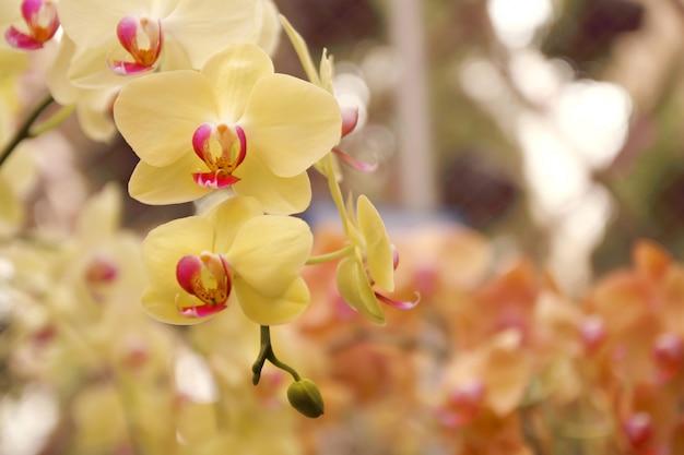Schließen sie oben vom orchideenblumenstrauß, schöne blühende orchideenblume im garten.