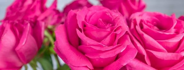 Schließen sie oben vom schönen blumenstrauß von rosa rosen. banner