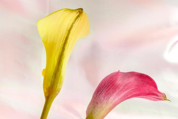 Schließen sie oben von den gelben und rosa lilienblumen