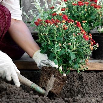 Schließen sie oben von den händen der frau in den schutzhandschuhen, die blumen im garten im frühjahr nah oben pflanzen