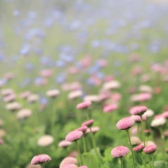 Schließen sie oben von den kleinen violetten blumen.