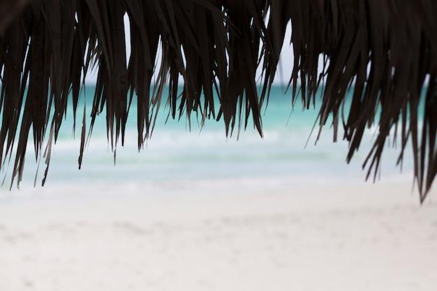 Schließen sie oben von den palmenregenschirmen am strand