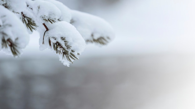 Schließen sie oben von den schneebedeckten bäumen im riisitunturi-nationalpark, finnland