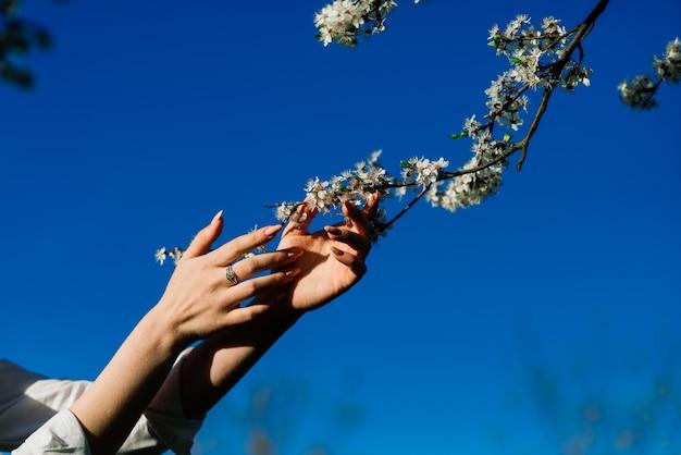 Schließen sie oben von den schönen weiblichen händen, die einen zweig des blühenden obstbaums und der blumen halten.